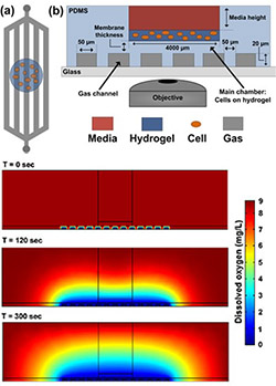 Photo of media, hydrogel, cell, gas diagram