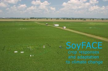 "Photo of a crop field with the text: ""SoyFACE crop responses and adaptation to climate change"""
