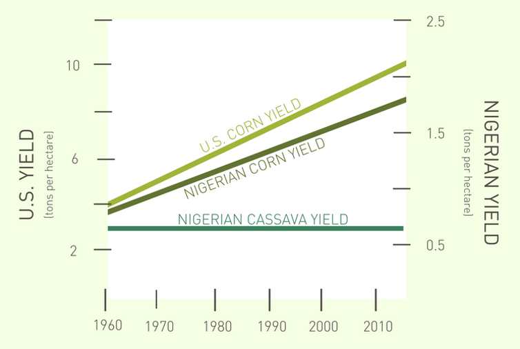 graph of historical yield of corn and cassava