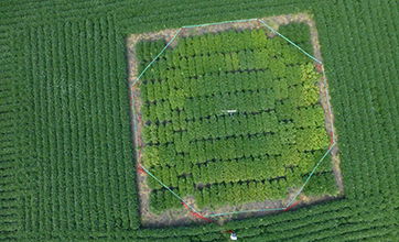An aerial image of a FACE ring at the University of Illinois SoyFACE facility.