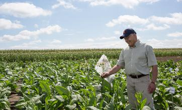 Don Ort in a field inspecting a bagged plant
